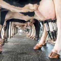 Dairy Farmer Thumbnail