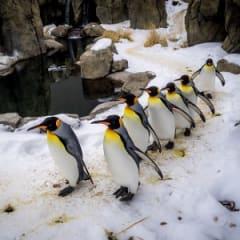 Curator Of Zoo Exhibits Thumbnail