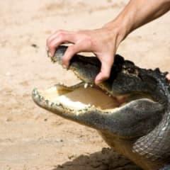 Crocodile Wrangler Thumbnail
