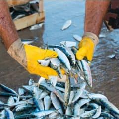Commercial Fisherman Thumbnail