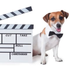 Animal Trainer For Film And Television