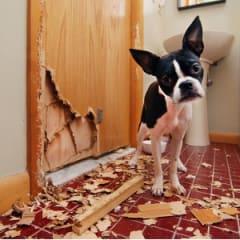 Animal Behavioural Specialist Thumbnail