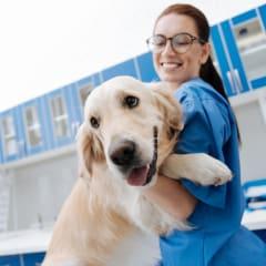 Veterinary Technician Thumbnail