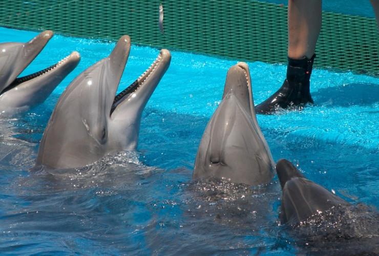 How to become a marine mammal trainer ‐ CareerExplorer