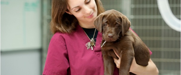 In order to provide excellent animal care, veterinarians rely on the skills of veterinary technologists, who do many of the same tasks for a veterinarian that nurses would for a doctor.