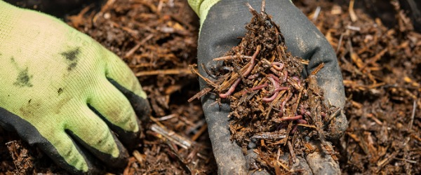 A vermiculturist is a worm farmer, and uses worms to convert waste products into healthy, nutrient-rich soil and organic fertilizer.