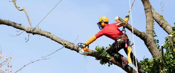 A Tree Service Technician cares for and maintains the health of trees.