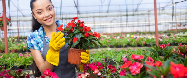 A nursery worker is someone who works outdoors or in a greenhouse, and whose job it is to plant, grow, water, transplant, prune, and generally care for plants, shrubs, and trees.