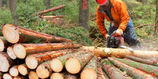 A logging worker is someone who cuts down, processes and transports mature trees for logging purposes.