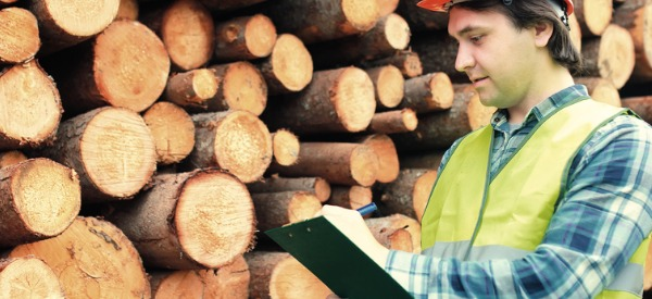 A log grader will inspect logs for imperfections and signs of rot or other decay. After inspection, a determination about the marketable value of the wood will be made.