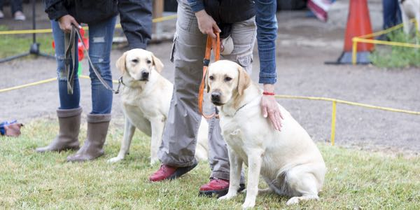 A guide dog trainer is someone whose purpose is to select and train suitable dogs for the blind or visually impaired, as well as to select and train each client in the use of the guide dog.