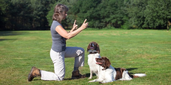 A dog trainer can provide basic obedience training with the owner, or provide training for specialized activities such as search and rescue, hunting, law enforcement, working with livestock, therapy, entertainment, dog sports, protection and detection.