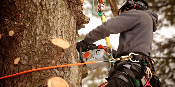 Arborists can determine what type of pruning is needed for individual trees. Pruning promotes healthy growth, rids the tree of any dead wood, and naturally protects the tree from insects.