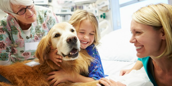 An animal assisted therapist typically works with a therapy dog in a variety of clinical settings, from nursing homes to hospitals.