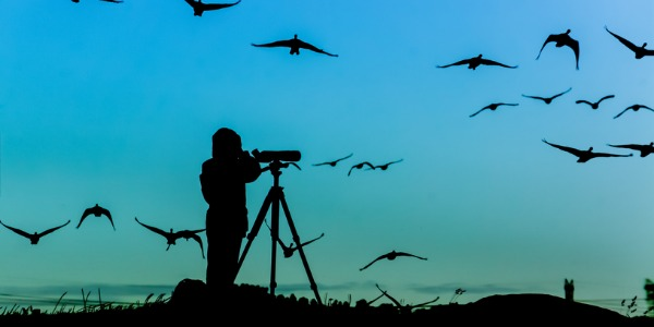 Ornithologists study every facet of bird life, including behaviour, flight and migration patterns, habitats, physiology, reproduction rates, and even their songs.