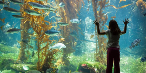 A little girl standing and looking at the fish though an aquarium observation glass.