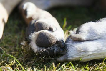 Kleinkind von Hund gebissen - Zeugenaufruf