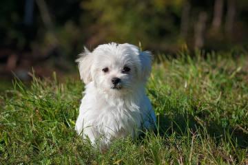 Stadt Schaffhausen SH - Junge von Hund gebissen - Zeugenaufruf