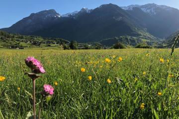 Das passiert in der Schweiz - Die Schweizer Community auf Facebook