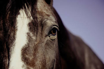 Dagmersellen LU -Reiterin verletzt sich beim Sturz vom Pferd