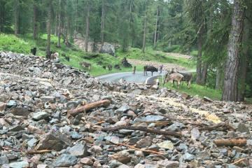 Pontresina GR - Murgänge verschütten Berninastrasse