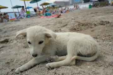 Tierleid in den Ferien