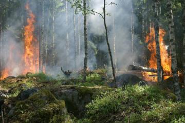 Pollegio TI - Waldbrand in der Leventina