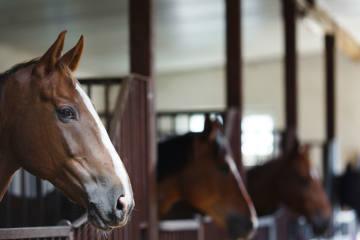 Mann vergewaltigt junges Pferd mehrfach – seine Au...