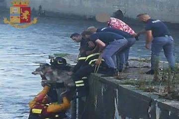 Schäferhund Wallace wird vor dem Ertrinken aus dem Fluss gerettet
