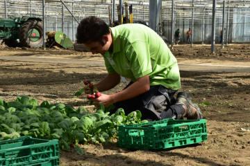 Gemüsegärtner kämpfen um den ersten Schweizermeistertitel