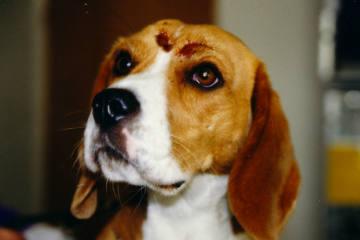 Damit der Notfall für Tierhalter nicht zur Tragödie wird