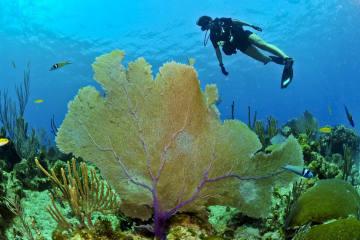 Dank Expertentipps fit fürs Unterwasser-Abenteuer