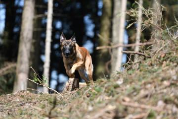 Zug ZG - Polizeihund findet gestohlene Handtasche