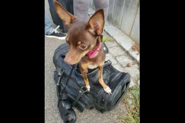 Gestohlener Hund vor Tierarztpraxis aufgefunden - Zeugenaufruf