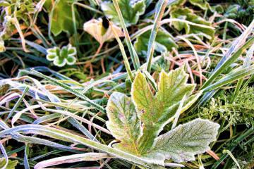 Am Morgen im Flachland lokal leichter Frost!