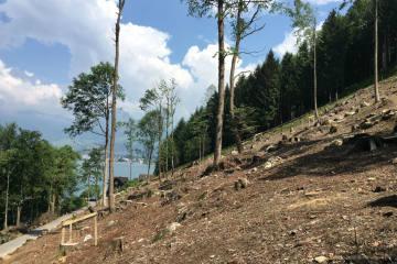 Kastanienhain auf der Treib eingeweiht