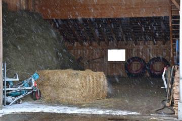 Avers Cresta GR - Landwirt nach Unfall verstorben