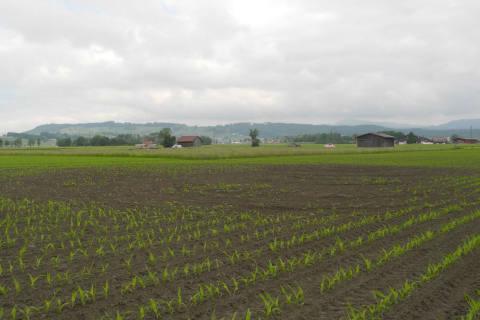 Reichenburg / Wangen SZ -  Sachbeschädigung auf Landwirtschaftsflächen / Zeugen gesucht