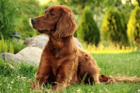 Bühl BW - Hund nach Spaziergang tot