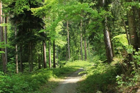 Bündner Wald in gutem Zustand