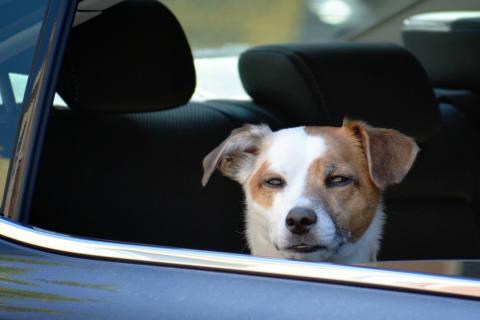 Erfurt TH - Polizei rettet Hund aus überhitztem Auto