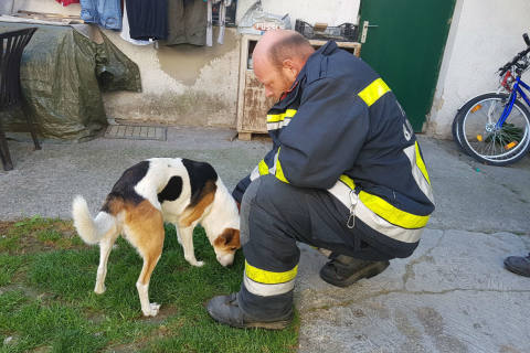 Bad Deutsch-Altenburg (AT) - Hund allein in Wohnung zurückgelassen