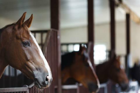 Mann vergewaltigt junges Pferd mehrfach – seine Ausrede ist absurd