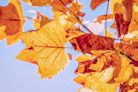 Sehr sonniger und warmer Oktober