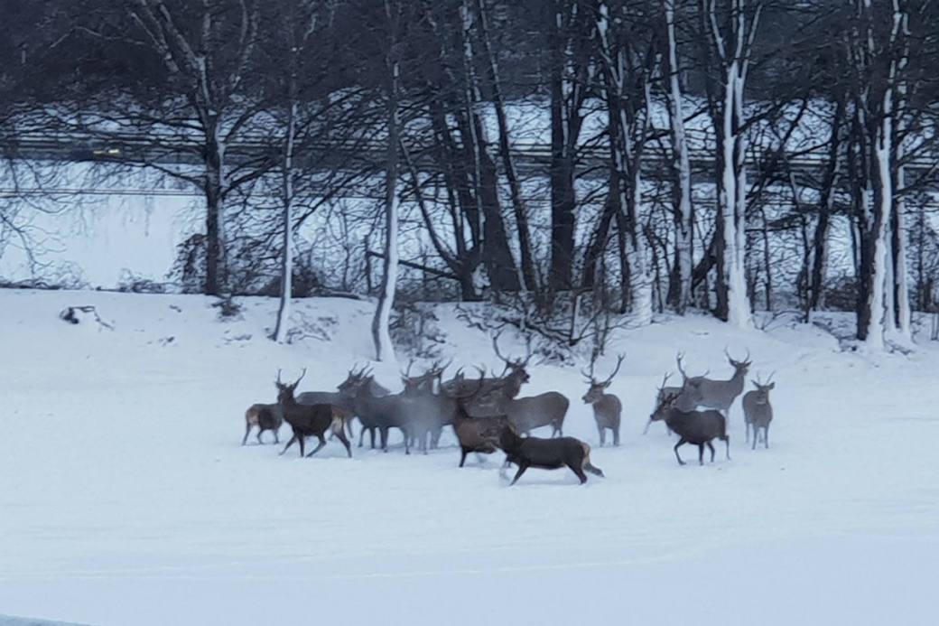 Die Wildhüter mussten mithelfen.