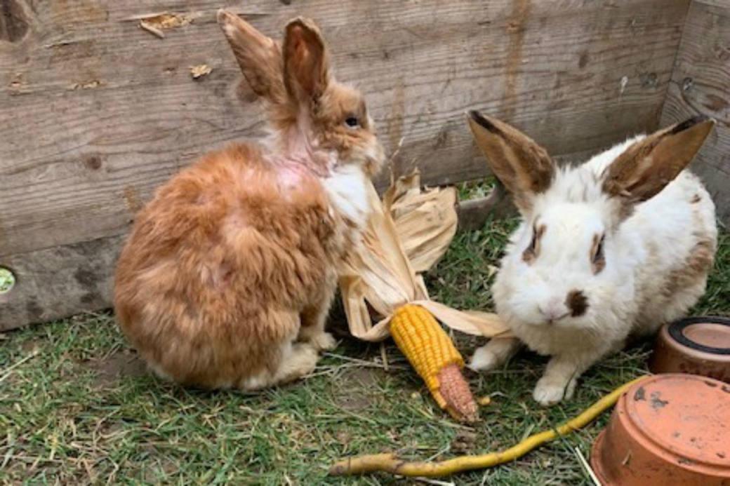 Wer hat diese Kaninchen ausgesetzt?