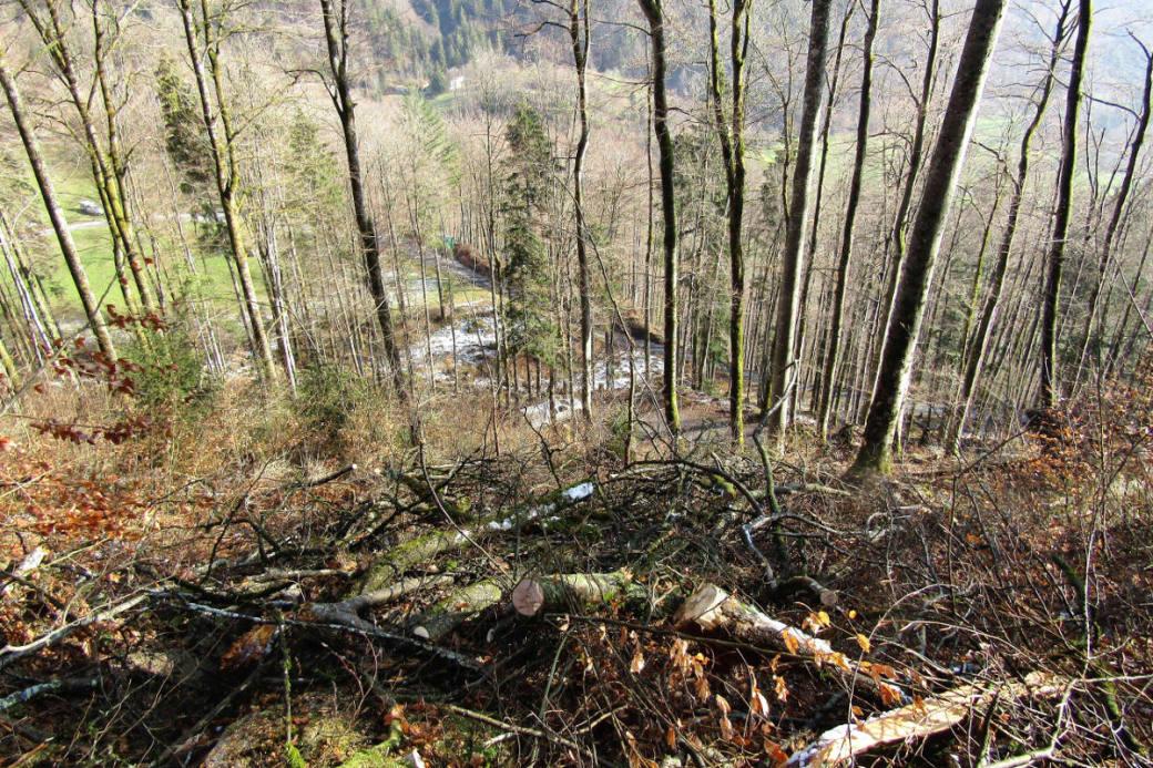 Bei Arbeiten in diesem Waldgebiet starb der Forstwart.