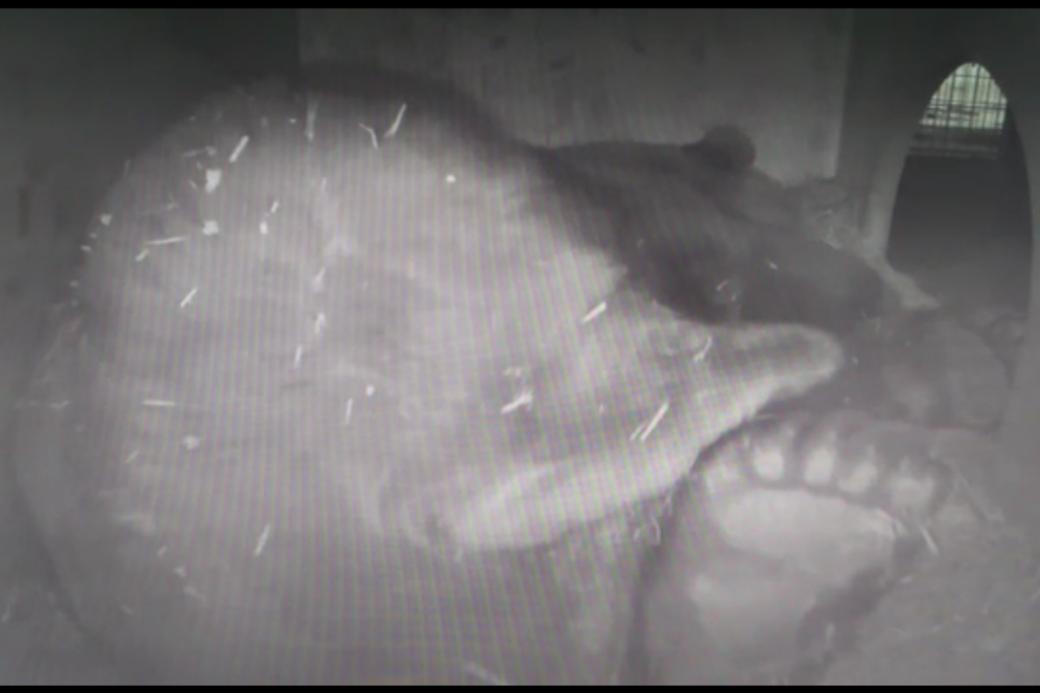 Napa schläft in seiner Überwinterungsbox.