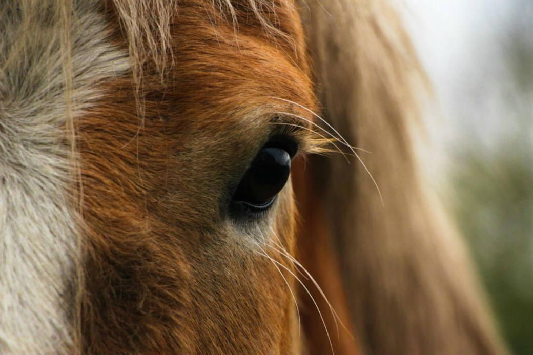 Das kleine Pferd verendete auf der Unfallstelle