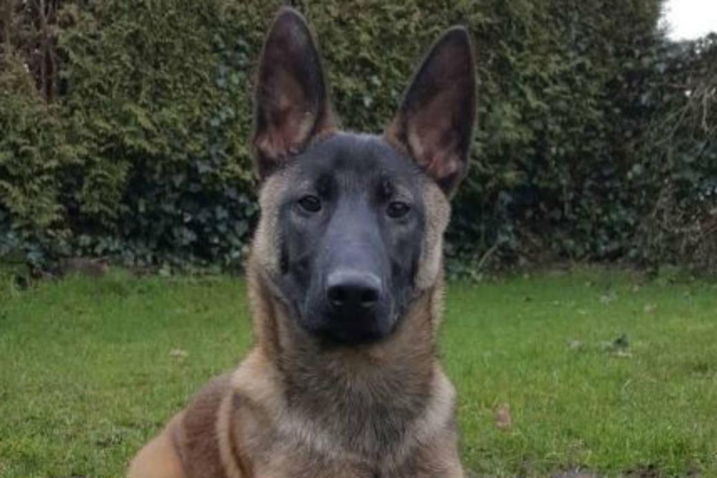 Jack ist jetzt ein Polizeihund.